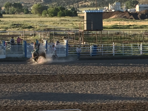 Bull Riding at the Fourth of July Rodeo