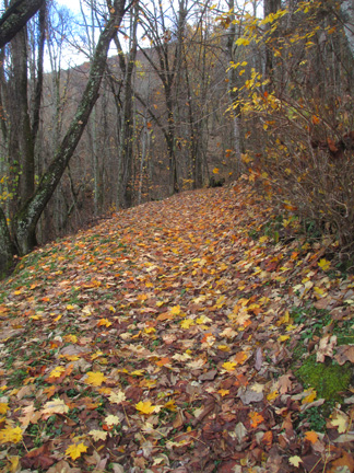 trail-in-fall-2015-web